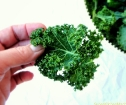 size of kale chip
